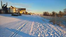 Ivy Glades in the Snow_Bob Allison